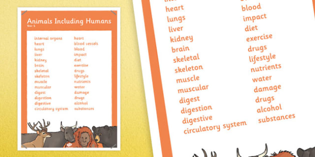 Year 6 Animals Including Humans Scientific Vocabulary Poster