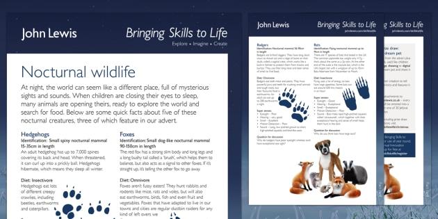 John Lewis Christmas Nocturnal Wildlife Fact Card Activity