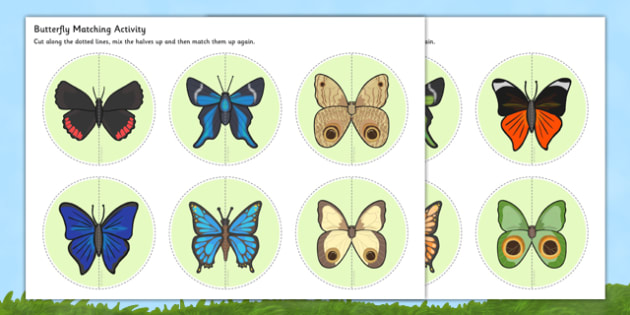 Butterfly Matching Activity - butterfly, matching, activity