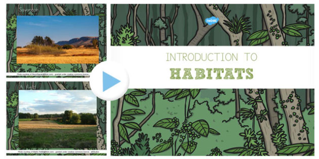Introduction to Habitats PowerPoint - australia, habitats, introduction