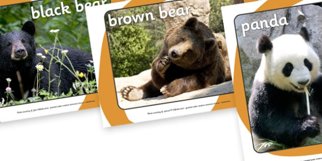 Bears Display Photos - Bears, bear, photo, Display Photos, display, animal, polar bear, grizzly bear, brown bear