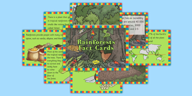 Rainforests Fact Cards - geography, rainforest, tropical, jungle, biome