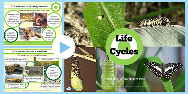 Year 5 Science Lifecycles Lesson Teaching PowerPoint - teaching pack