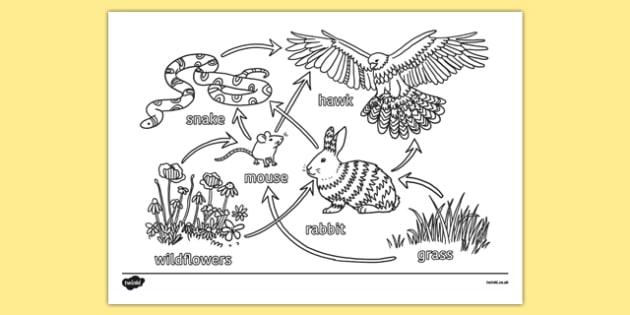 KS3 Science Revision Colouring Food Web - ks3, science, revision, colouring, food web