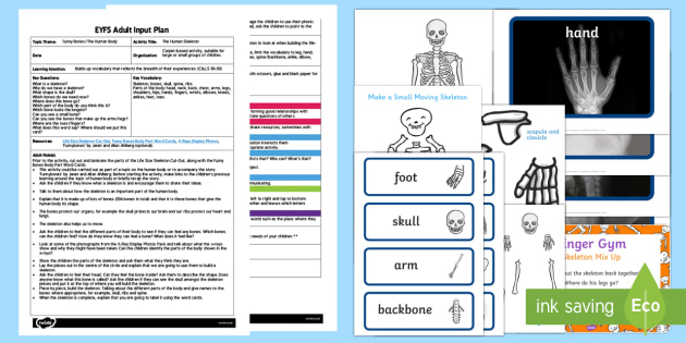 EYFS The Human Skeleton Adult Input Plan and Resource Pack