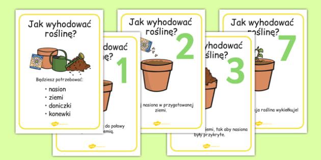 Plakaty Jak wyhodować roślinę po polsku - przyroda