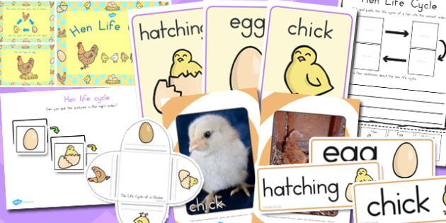 Hen Life Cycle Resource Pack - australia, hen, life cycle, pack