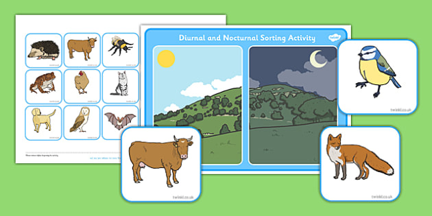 Nocturnal and Diurnal Animals Sorting Activity - sorting activity, nocturnal and diurnal animals, animals, nocturnal, diurnal, animal sorting activity