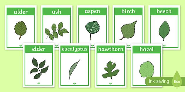 Tree Leaf Identification Display Posters - woodland, leaf ...