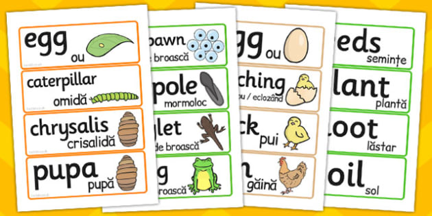 General Life Cycle Word Cards Romanian Translation - words, cycles