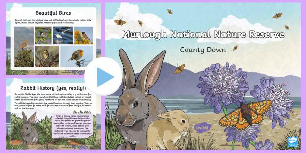 Murlough National Nature Reserve PowerPoint - World Around Us, sand dunes, habitats, heathland, County Down, Northern Ireland, Mourne, marsh friti
