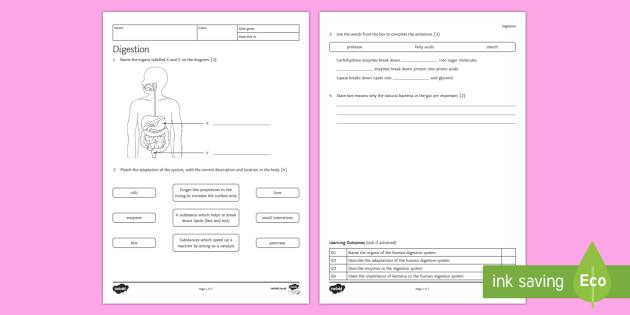 KS3 Digestion Homework Activity Sheet - Homework, digestion, digestive, digestive system, nutrition, eating, healthy lifestyle, enzymes, foo