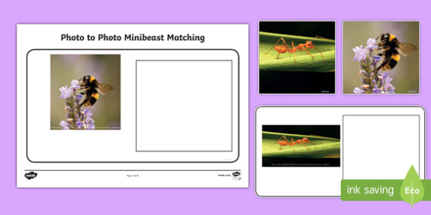 Workstation Pack: Photo to Photo Minibeast Matching Activity