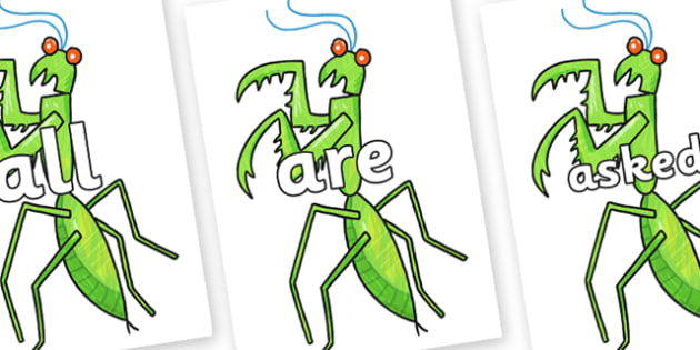 Tricky Words on Praying Mantis to Support Teaching on The Bad Tempered Ladybird - Tricky words, DfES Letters and Sounds, Letters and sounds, display, words