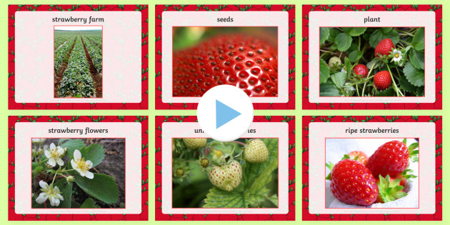 Strawberry Words and Pictures PowerPoint - strawberries, strawberry plants, strawberry farming, strawberry picking, strawberry plant life cycle