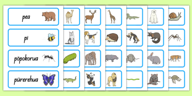 Animals Word Cards