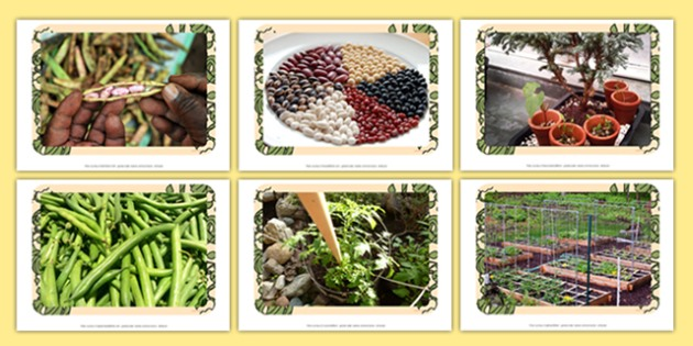 Beanstalks Photo Pack - EYFS, Early Years, plants and growth, Jack and the Beanstalk, Jasper's Beanstalk, Mick Inkpen, Nick Butterworth