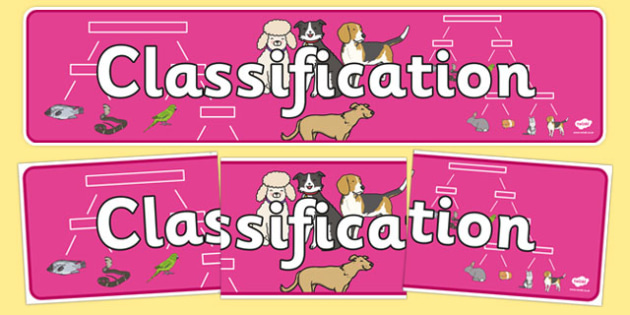 Classification Display Banner - classification banner, classifying animals, classification display, classification display header, bird classification, ks2