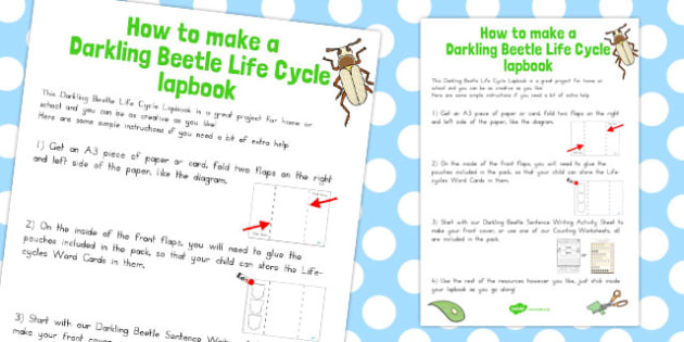 Darkling Beetle Life Cycle Lapbook Instruction Sheet - australia