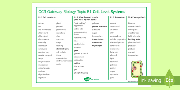 OCR Gateway Biology Cell Level Systems Word Mat - Word Mat, GCSE, cell, cells, Cell structure, What happens in cells, microscopes, Respiration, photos