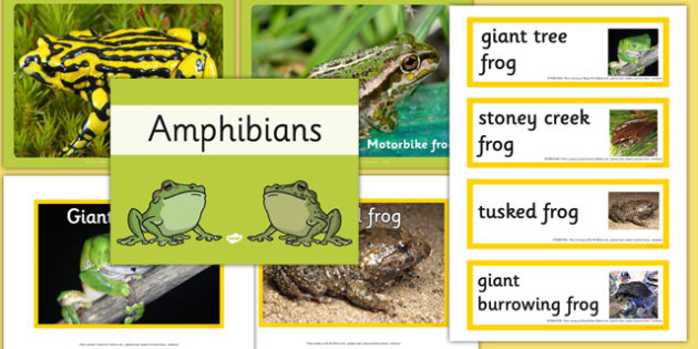 Australian Amphibians pack - australia, animals, amphibians, pack