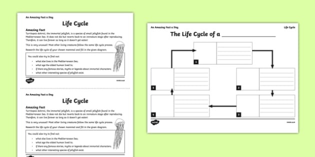 Life Cycle Activity Sheet - amazing fact a day, activity sheet, activity, activities, mammal, life cycle, worksheet