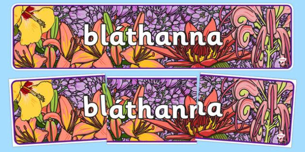 Flowers Display Banner Gaeilge - plants, flower, header, display