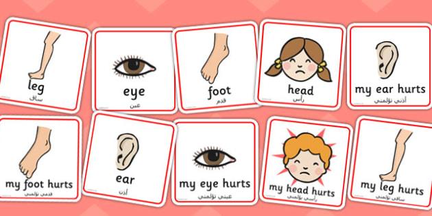 Parts of the Body Communication Cards Arabic Translation - arabic