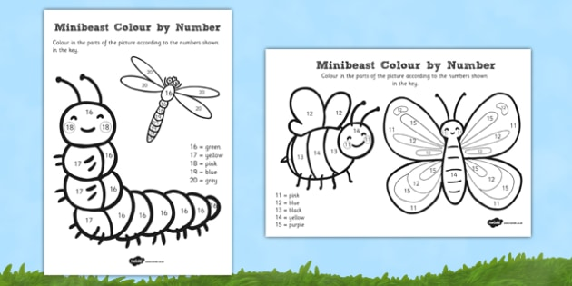 Minibeast Colour by Number 11-20 - minibeast, colour, number, 11-20