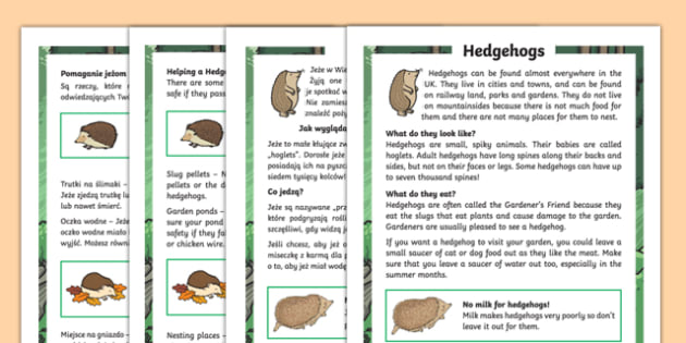 Hedgehogs Differentiated Fact File Polish Translation-Polish-translation