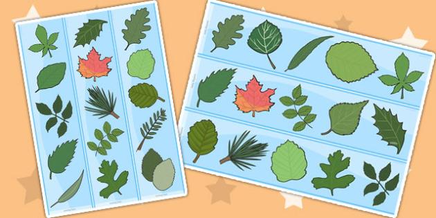 Leaf Display Borders - leaf, leaves, plants, flowers, borders