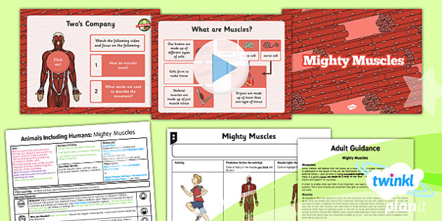 PlanIt - Science Year 3 - Animals Including Humans Lesson 6: Mighty Muscles Lesson Pack