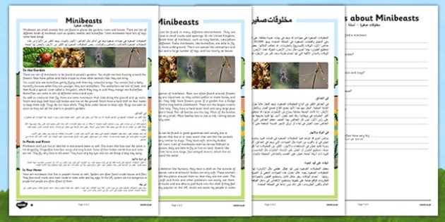 Minibeasts Differentiated Reading Comprehension Activity Arabic Translation - arabic, Reading, comprehension, questions, ask, answer, minibeasts, habitat, insects, invertebrates, shell, fly, wings, legs, pollen, crawl, bumblebee, dragonfly, worm, sna