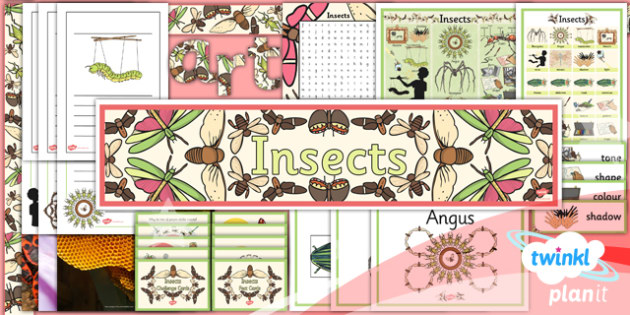 Art: Insects LKS2 Unit Additional Resources