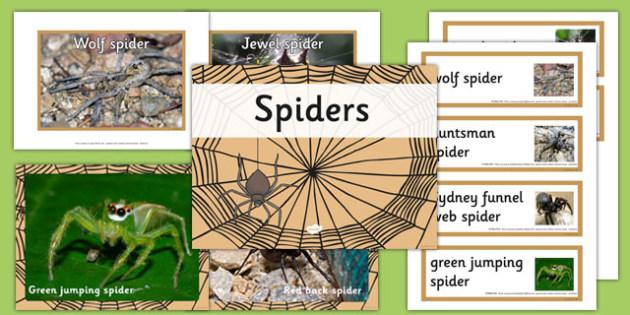 Australian Spiders pack - australia, spiders, pack, animals