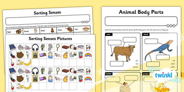 Science: Animals Including Humans Year 1 Unit Home Learning Tasks