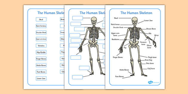 skeleton labelling sheets (common names) - free download, Skeleton
