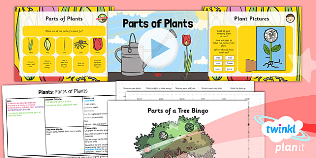 Science: Plants: Parts of Plants Year 1 Lesson Pack 5