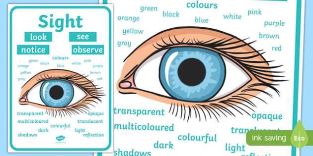 Sight Vocabulary Display Poster