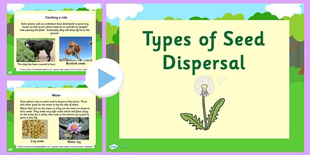 Types of Seed Dispersal PowerPoint - seed dispersal, seed dispersal powerpoint, plant germination powerpoint, plants, how plants disperse their seeds, ks2