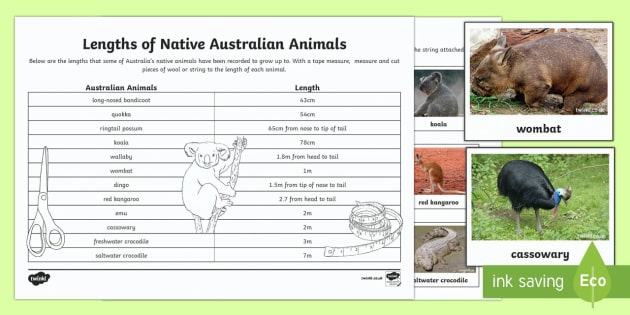 Australian Animals Measurement Activity Sheet - worksheet, Australian Animals, reptiles, cloze passages, activity sheets, word search, research, fas