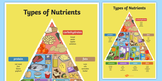 Types of Nutrients Pyramid Poster - poster, display, pyramid