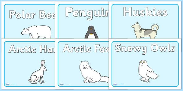 Polar Animals Group Signs - Polar Regions, polar region, region, polar, animals, animal, group signs, group labels, group table signs, table sign, teaching groups, class group, class groups, table label, ice, North Pole, South Pole, Arctic, Antarctic