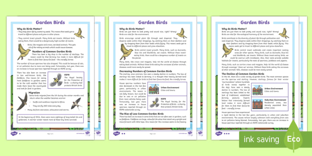 KS2 Garden Birds Differentiated Reading Comprehension Activity - KS2 RSPB Big School's Birdwatch (3 Jan-17 Feb 2017), RSPB, school, bird, bird watch, garden birds c