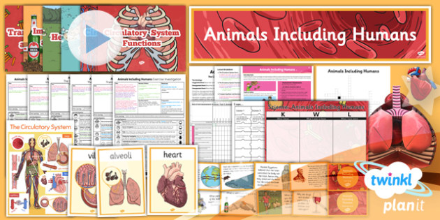 Science: Animals Including Humans Year 6 Unit Pack