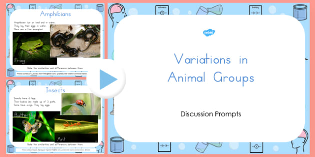 Animal Groups PowerPoint - australia, animal, groups, powerpoint
