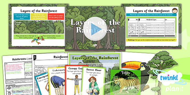 PlanIt - Geography Year 3 - Rainforests Lesson 3: Layers of the Rainforest Lesson Pack - geography, rainforest, tropical, jungle, biome, layer