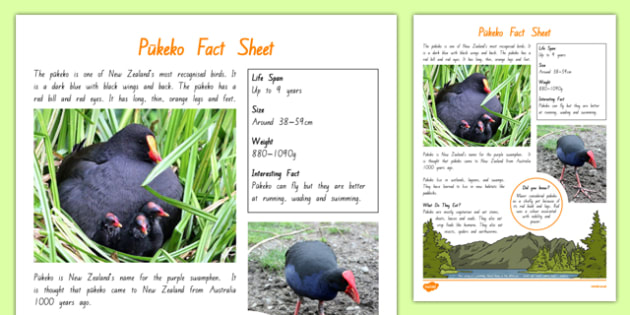 New Zealand Native Birds Pukeko Fact Sheet - nz birds, new zealand, Native, birds, animals