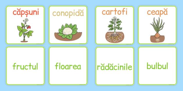 Fructe și legume - Cartonașe pereche - fructe, legume, cartonașe, pereche, joc, de unit, romanian, materiale, materiale didactice, română, romana, material, material didactic