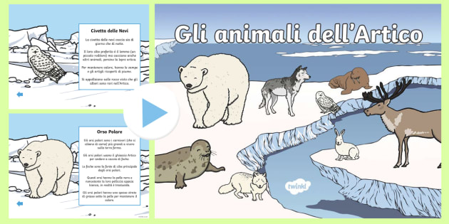 Gli animali dell'Artico Power Point - Animali dell\'artico, artico, animali, power point, invernale, inverno, italiano, italian
